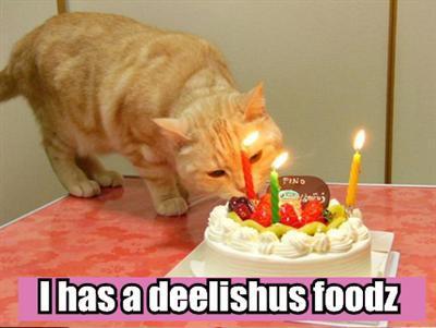 Cat & Cake