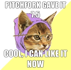 Hipster Kitty Loves Pitchfork