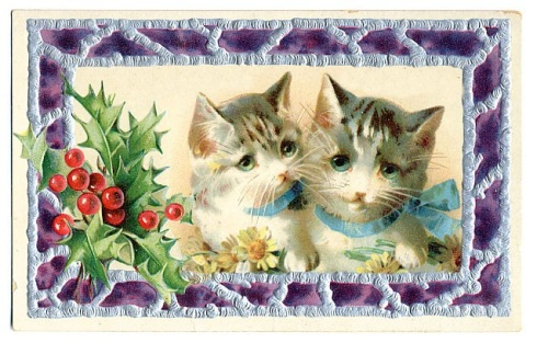 Cats in purple frame
