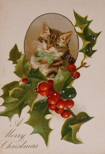 https://theczech.files.wordpress.com/2010/12/cat18.jpg