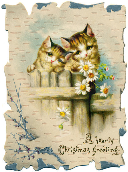 Cats with daisies
