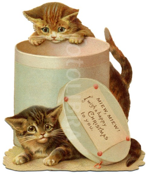Kittens and hat box