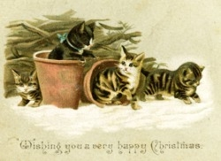 Cats in Pots